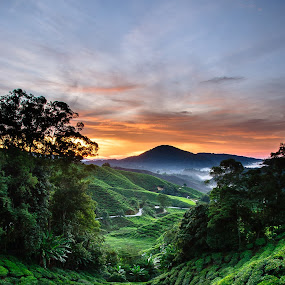 Sunrise at the Cameron Highland III by Pierre Husson - Landscapes Sunsets & Sunrises ( cameron highland, malaysia, sunrise, boh tea, tea plantation )