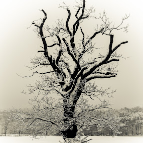 The Lonesome Tree by Matt Cooper - Landscapes Weather ( building, winter, cold, tree, snow, white, cloud, branch )