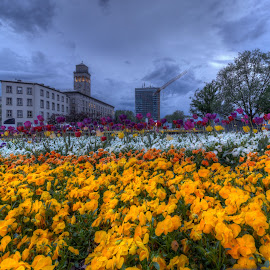 flowers in the city by Jessica Horn - City,  Street & Park  City Parks ( karlsruhe, dawn, park, blue hour, street, night, germany, evening, spring, flower, city )