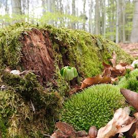 by Olga Havlíčková - Nature Up Close Other plants