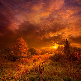 For a Time I Rest in the Grace of the World and am Free by Phil Koch - Landscapes Sunsets & Sunrises ( vertical, arts, travel, love, sky, nature, shadow, weather, light, trending, colors, twilight, art, mood, horizon, journey, portrait, rural, country, dawn, environment, season, serene, outdoors, popular, lines, natural, inspirational, hope, wisconsin, joy, landscape, photography, sun, life, emotions, dramatic, horizons, inspired, office, clouds, heaven, beautiful, scenic, living, morning, shadows, fineart, unity, sunset, peace, sunrise, earth )