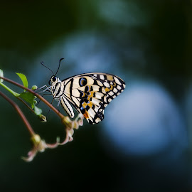 by Jo Wood - Novices Only Macro ( butterfly, nature up close, nature photography, photo, photography )