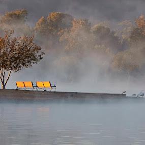 Misty Morn by Ann J. Sagel - City,  Street & Park  City Parks ( bench, ann sagel, birds, mist,  )