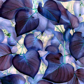 Red Bud Leaves - IA Blue by Tina Dare - Nature Up Close Leaves & Grasses ( abstract, up close, macro, ia, nature, redbud, blue, inverted, leaves, close up )
