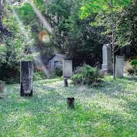 Grave Flare by Kenneth Beatson - City,  Street & Park  Cemeteries ( graveyard, grass, lens flare, gravestone, landscape )