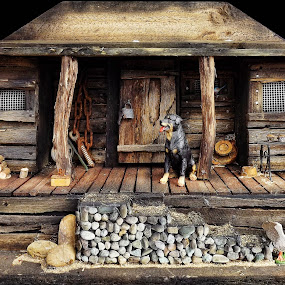 Guard Dog by Angelica Glen - Artistic Objects Other Objects ( model, wooden, hut, house, dog, aussie,  )