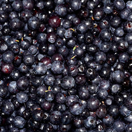 Blueberry by Juanita Blåfield - Food & Drink Fruits & Vegetables ( blueberry, blue, forest )