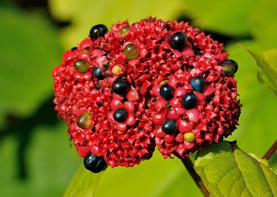 by Tomasz Budziak - Nature Up Close Gardens & Produce ( nature, nature up close )