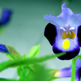 flower by Saptarshi Mandal - Nature Up Close Flowers - 2011-2013 ( macro, nature, blue, green, flower )