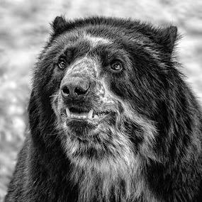 by Judy Rosanno - Black & White Animals ( spring, march 2018, san antonio zoo,  )