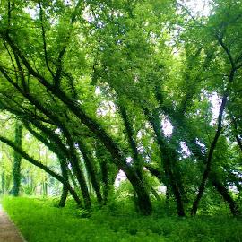 Full of green by Svetlana Saenkova - City,  Street & Park  City Parks ( green, tree,  )