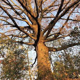 Large tree at the park by Mary Gallo - City,  Street & Park  City Parks ( kinder farm, nature, tree, park, colors, fall )