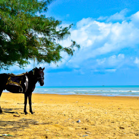 Lombang beaches madura by Teguh Ibrahim - Landscapes Beaches ( beaches, animals, landscape )