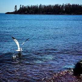 beautiful day in grand marais mn by Sierra Parsons - Landscapes Weather