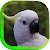 Parrot Voices live wallpaper file APK for Gaming PC/PS3/PS4 Smart TV