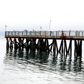 Pier  by Todd Reynolds - Buildings & Architecture Bridges & Suspended Structures