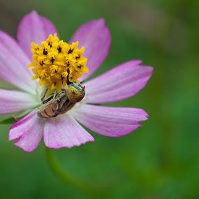Rezeki by Mohd Afiq - Nature Up Close Flowers - 2011-2013