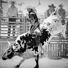 Living A Childhood Dream by Brian  Shoemaker  - Black & White Sports ( cowboy, rider, dream, bullrider, black and white, rodeo, western, living, bull )