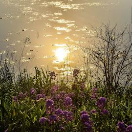 Sun reflecting on rock lake by Jason Lockhart - Nature Up Close Water ( water, wisconsin, lake mills, sun reflection, rock lake, flowers, green grass )