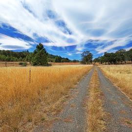 Golden Field of Grain by Chris Bartell - Landscapes Prairies, Meadows & Fields ( field, oregon, grain, landscape, golden )