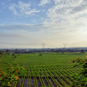 paddy field by Gunarsa Gunarsa - Landscapes Prairies, Meadows & Fields ( paddy field, morning, landscape, soreang )