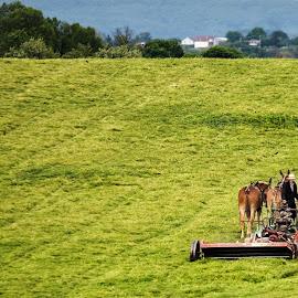 harvest by Jesper Holgaard - Landscapes Prairies, Meadows & Fields ( amish, amishland, høster med hest, virginia, harvest, usa )