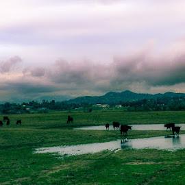 Cow tip skinny dip by Brendan Mcmenamy - Novices Only Street & Candid ( dip, cloud, cow, skinny, tip )