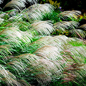 Whisper Grass by Martin Stepalavich - Nature Up Close Leaves & Grasses