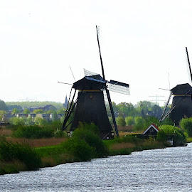 Netherlands Windmills in Early Morning by Dee Haun - Buildings & Architecture Other Exteriors ( landscapes, windmills, waterscapes, 150506$0346ce1, netherlands, early morning )