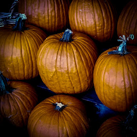 Pumpkins by Anne LiConti - Instagram & Mobile Android ( #autumncolors, #orange, #phonephoto, #autumn, #mobilephoto, mobilephotography, #pumpkins, #phonephotography, #android )