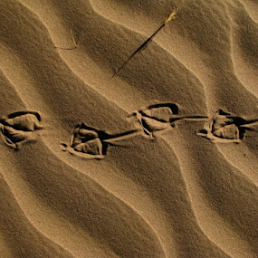 Footprint by Hamed Ghalandar - Artistic Objects Other Objects ( iran, desert, rig e jen )