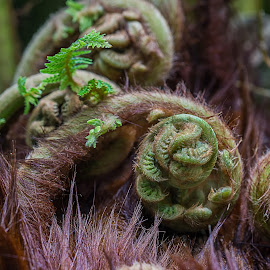 Fern Hollow by Gary Stanley - Nature Up Close Other plants ( fern, d800e, national orchid garden, 200mm, singapore botanical garden )