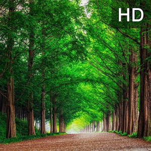 Green Forest Wallpaper Full HD file APK for Gaming PC/PS3/PS4 Smart TV
