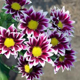 colorful flowers by LADOCKi Elvira - Flowers Single Flower ( nature, colorful, summer, flowers, garden )