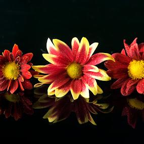 by R De Leon - Novices Only Flowers & Plants