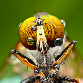 After rain by ธเนศ ขวยไพบูลย์ - Animals Insects & Spiders ( canon, macro, insect )