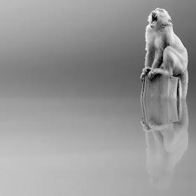 editan animals.jpg