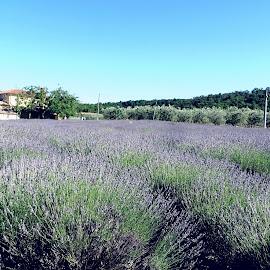 Casa nei campi di lavanda by Patrizia Emiliani - Landscapes Prairies, Meadows & Fields ( lavanda, campi, casa )