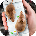 Mouse on Screen Scary Joke APK for Kindle Fire