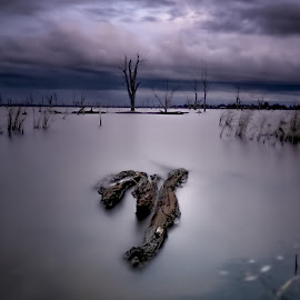 Lake Mulwalla Dead Trees by Jim Merchant - Landscapes Waterscapes ( waterscape, long exposure, lake, landscape )