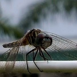 Sunday morning Dragonfly by Christina McGeorge - Instagram & Mobile Android ( spring dragonfly, dragonfly )