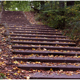 Stairs to Alley Pond  by Lorraine D.  Heaney - City,  Street & Park  City Parks