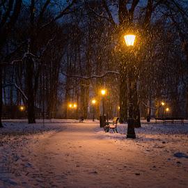 Winter evening by Witold Steblik - City,  Street & Park  City Parks ( lantern, winter, bench, night, light, evening )