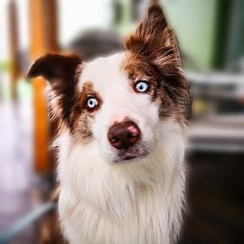 Best friend by Robert Seme - Animals - Dogs Portraits ( photooftheday, dogs, photo, dog, photography, dog portrait,  )