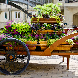 by Joe Rahal - Flowers Flower Arangements