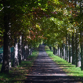 A Shady Walk by Cheryl Hesketh - Novices Only Landscapes ( laneway, autumn, trees, road, country )