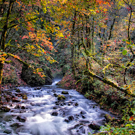 Falls colors in the Columbia River Gorge by Chris Bartell - Landscapes Waterscapes ( water, oregon, goarge, autumn, lanscape )