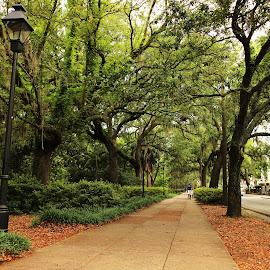 A Southern Scenery - Savannah, GA by Avishek Bhattacharya - City,  Street & Park  City Parks