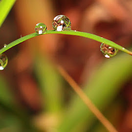 by Luxmen 46 - Nature Up Close Natural Waterdrops
