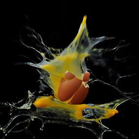 amazing egg by Assoka Andrya - Novices Only Objects & Still Life